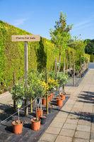 Plants in pots for sale in dutch garden center