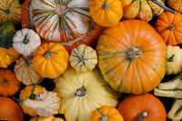 Many Pumpkins background