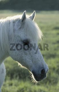 Pferdeportrait auf Wiese im Gegenlicht mit Lichtsaum