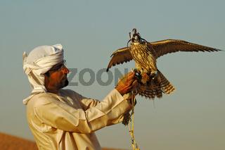 Arabischer Falkner mit seinem Jagdfalken