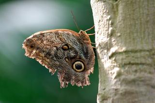 Schmetterling im Mannheimer Luisenpark