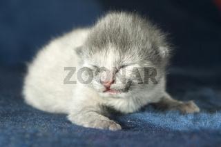 Katzenbaby, newborn, kitten, catbaby, blind, blindes, neugeboren, neugeborenes, catbaby, cat-baby