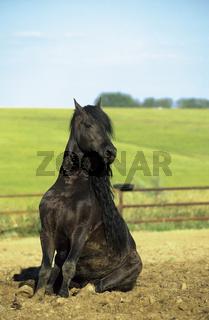 Friesenhengst, Friesian Horse, funny animals, lustige tierbilder