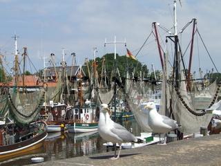 Möwen am Kutterhafen in Greetsiel