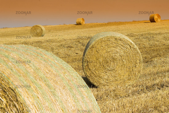 Straw bales on a stubble field, Rools of Hay, Germany, Germany