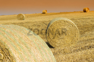 Strohballen auf einem Stoppelfeld, Rools of Hay, Germany, deutschland