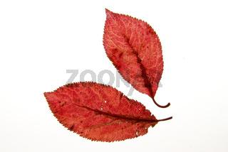 Herbst 081002 002