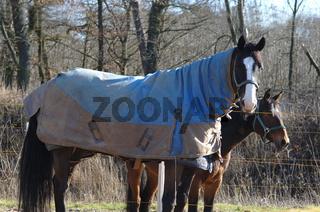 Pferde mit Schutzdecke