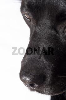 schwarzer Hund - black dog