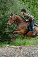 Rider on a brown horse during jumping training