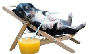 Haushund, Canis lupus f. familiaris, domestic dog