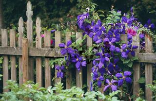 Gardenimpression, germany, Nordrhein Westfalen, Gartenimpression