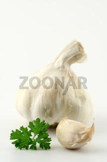 Knoblauch auf weißem Untergrund, garlic on white underground