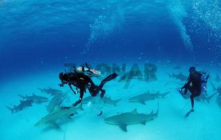 Unterwasserfotografen, Zitronenhai, Negaprion brevirostris, Bahamas
