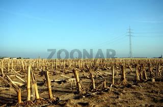 Strommast auf Maisfeld
