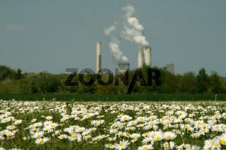Industrie + Blumen / Flowers & Industry