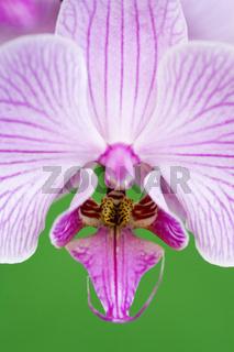 Detailaufnahme einer Orchideenblüte