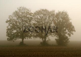 Bäume im Nebel 02