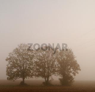 Bäume im Nebel 11