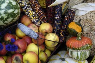 Pumpkin, Maize, Medlar, Apple, Cucurbita pepo, Zea mays, Mespilus germanica, Kuerbisse, Ziermais. Deutsche Mispel, Aepfel, Zierkuerbisse, Zierkuerbis, Gartenkuerbis, Herbststilleben