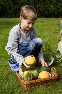 Junge bei der Kürbis Ernte