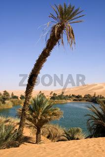In der Mandara Oasis, Libyen,