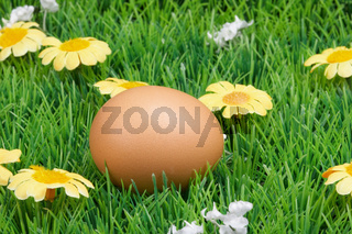 egg on meadow