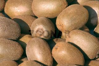 Kiwi fruits | Kiwis