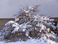 Ostereier im Schnee - Easter egg in snow