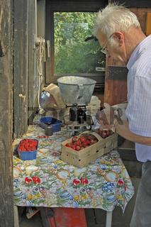 Sommerzeit- Erdbeerzeit