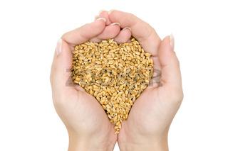 Handvoll Getreide