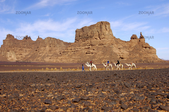 Caravan in the Hamada desert