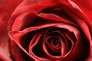 rose bud on fork