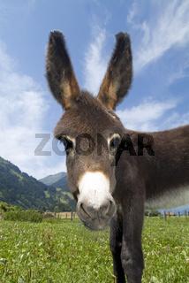 Donkey/Esel