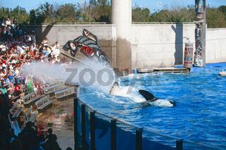 Killerwhale, Orca, Schwertwal, Killerwal, Killer Whale