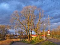 Angestrahlter Baum vor dramatischem Himmel