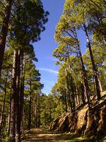 Waldwanderung Pico