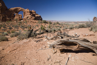 Stump and Turret Arch