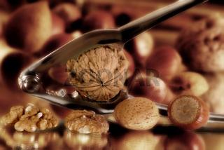 Nüsse, Nuts
