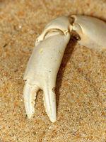 Krabbenschere - crab cutter