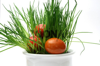 Oster Schnittlauch - chives eggs