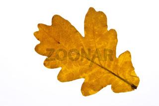 Herbst 081002 022