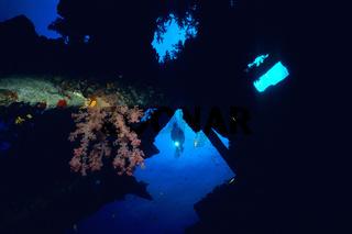 Orange Weichkoralle im Schiffwrack Carnatic im Roten Meer / Orange Soft Coral in the shipwreck Carnatic in the Red Sea