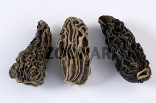 Black morel | Spitzmorchel