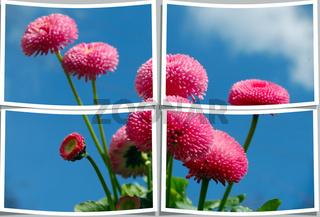 Blüten Collage