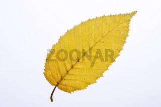 Herbst 081002 021