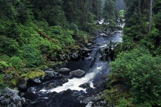 rainforest, regenwald, urwald, jungle, anan creek, tongass national forest, alaska, usa,