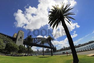 Harbour Bridge mit Palmen