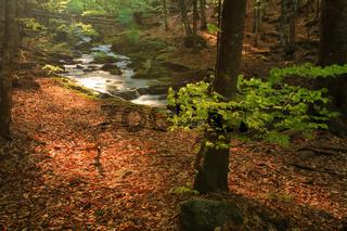 forrest floor, forest soil, waldboden, kleine ohe,  brook, creek, bach, np bavarian forest, bayrischer wald, bayner, bavaria, germany, deutschland,