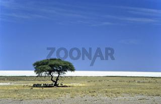 Etosha Pfanne, Namibia, Afrika